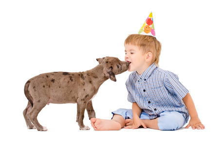 Pit bull puppy kisses the boy in a celebratory cap photo