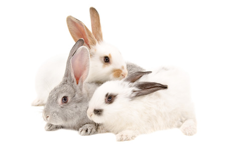 The three rabbits isolated on a white background