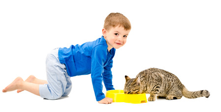 Cute cheerful boy and the cat who eats isolated on white background photo