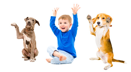 Cheerful boy and two dogs sitting together with hands raised isolated on white background