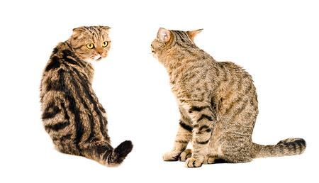 Two cats, looking at each other, sitting together isolated on white background photo