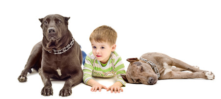 Cute little boy and two dogs of breed pit bull lying down together isolated on white background photo