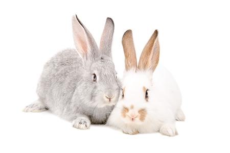 lapin blanc: Deux lapins assis ensemble isol� sur fond blanc