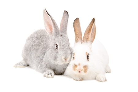 Two rabbits sitting together isolated on white background