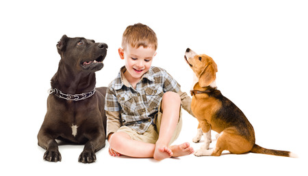 Cheerful boy sitting with a dog breed Staffordshire terrier and beagle dog isolated on a white background