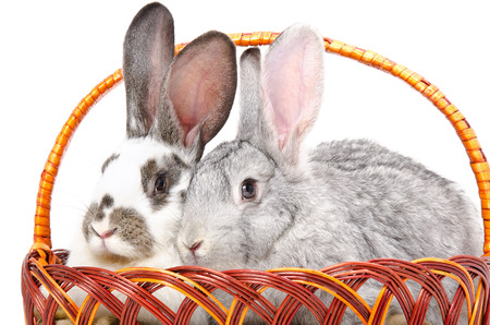Two rabbits sitting together in a basket isolated on white background