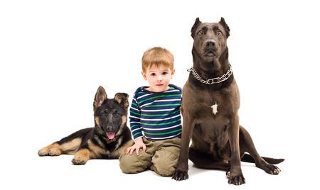 Cute boy sitting with a dog breed Staffordshire Terrier and German Shepherd puppy isolated on white background