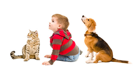 Cute boy, beagle dog and cat Scottish Straight sitting together isolated on white background, side view photo