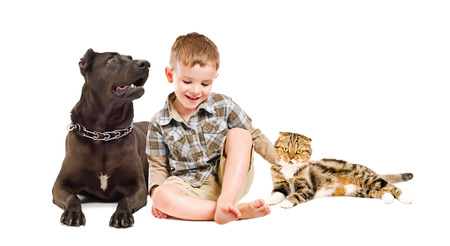 Happy boy sitting with the dog breed Staffordshire Terrier and Scottish Fold cat isolated on white background photo