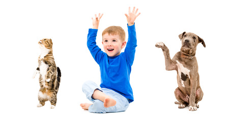 Cheerful boy, pit bull puppy and cat Scottish Fold sitting with hands raised isolated on white background photo