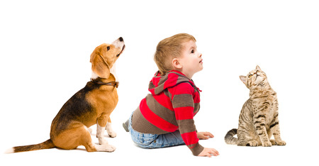 Cute boy, beagle dog and cat Scottish Straight sitting together, side view, isolated on white background photo