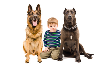 black and white pit bull: Cute boy and two dogs of breed German shepherd and Staffordshire terrier sitting together isolated on white background