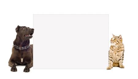 perros jugando: Perro y gato que mira a escondidas de detrás de la bandera aisladas sobre fondo blanco Foto de archivo
