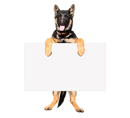 Puppy German Shepherd holding a placard isolated on white background