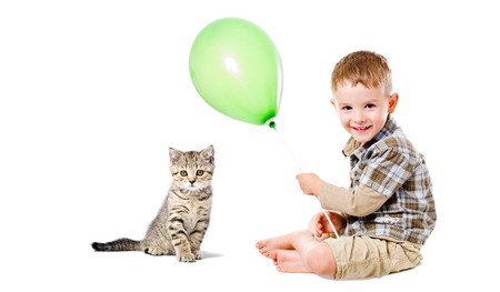 Cheerful boy and kitten Scottish Straight sitting together isolated on white background