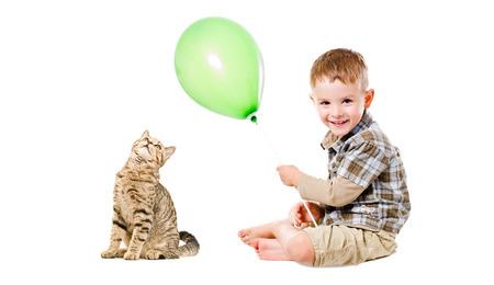 scottish straight: Cheerful child and cat Scottish Straight isolated on white background