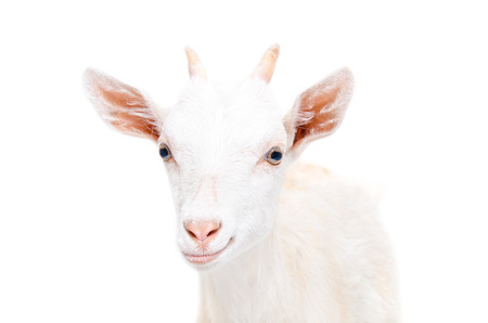 Portrait of a smiling young goat isolated on white background