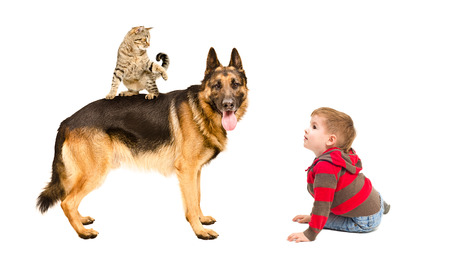 Boy playing with dog and cat, isolated on white background