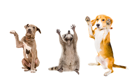 The company of cheerful animals isolated on a white background Stockfoto