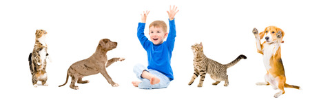 black and white pit bull: Group of a cheerful pets and boy isolated on white background