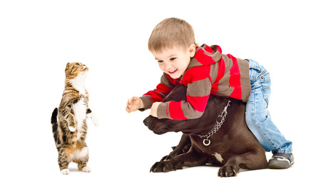 white playful: Child, dog and cat playing together isolated on white background
