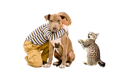 kitties: Affectionate boy, pitbull puppy and a kitten isolated on white background