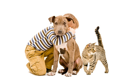 Affectionate kid, pit bull puppy and cat together, isolated on white background