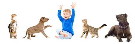 black and white pit bull: Cheerful child, dogs and cats together isolated on white background