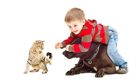 black and white pit bull: Child, dog and cat cheerfully playing together, isolated on white background