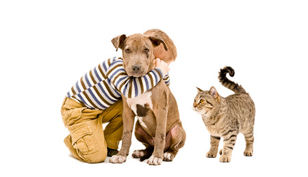 black and white pit bull: Boy, pit bull puppy and cat isolated on white background