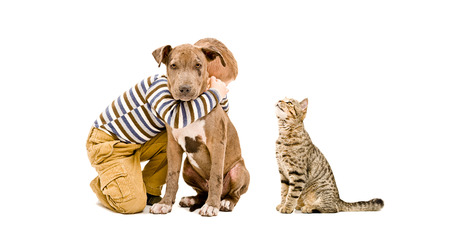 pet cat: Loving boy, pit bull puppy and cat, isolated on white background Stock Photo