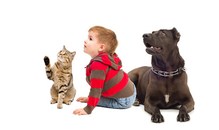 black and white pit bull: Curious cat, boy and dog, sitting together, isolated on white background