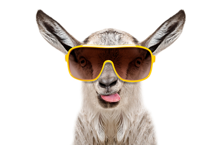 Portrait of a goat in sunglasses showing tongue isolated on white background