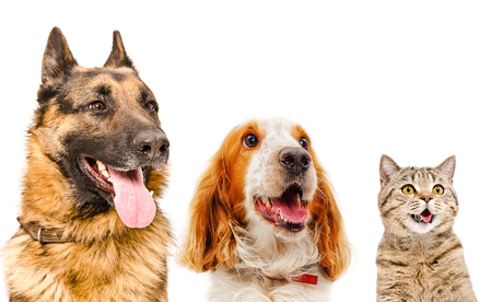Portrait of pets, closeup, isolated on white background