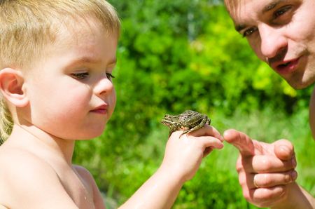 anuran: Father and son on nature are considering frog