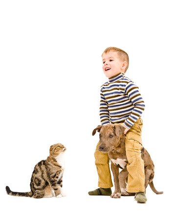 black and white pit bull: Happy kid playing with a puppy pitbull and cat, isolated on white background