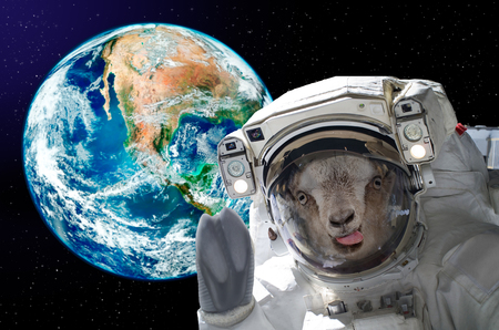 Portrait of a goat astronaut, showing tongue, in space on a background globe