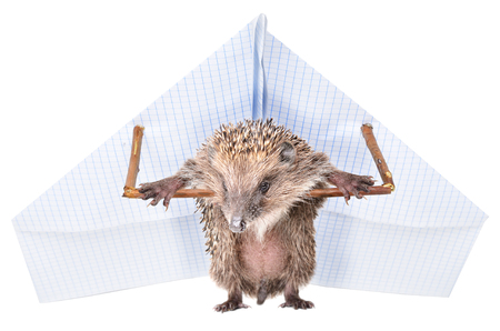 Funny hedgehog standing with a paper paraplane, isolated on a white background Stock Photo