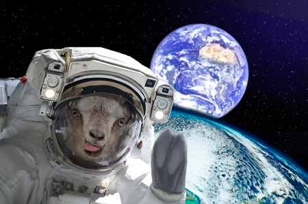 Goat astronaut, showing tongue, in space on a background globe. Elements of this image. Stock Photo