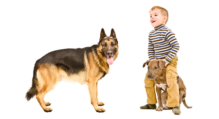 Cheerful child playing with a two-dogs, isolated on white background