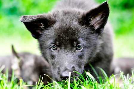 Portrait of a curious puppy in the grass Stock Photo
