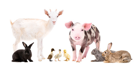 Group of cute farm animals, isolated on white background Stock Photo