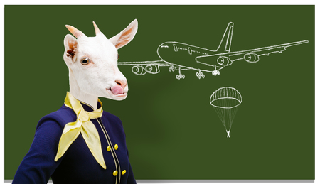 Funny stewardess school. Portrait of a stewardess goat on the background of a school board.