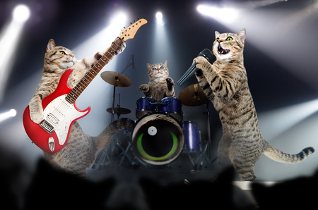 Concert of cats in the light of searchlights