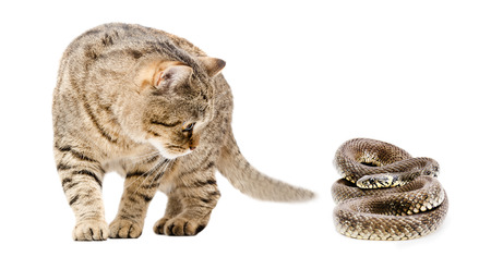 asp: Curious cat and snake isolated on white background