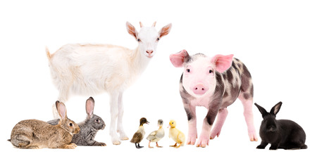 Group of cute farm animals together, isolated on white background Stockfoto