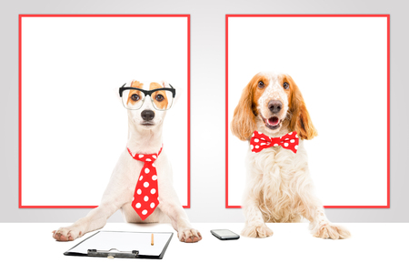 Two business dogs in the office Reklamní fotografie