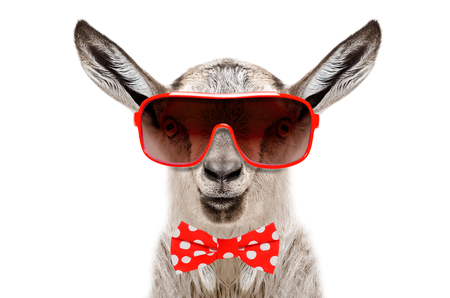 Portrait of a funny goat in a sunglasses and bow tie, isolated on white background Stock Photo