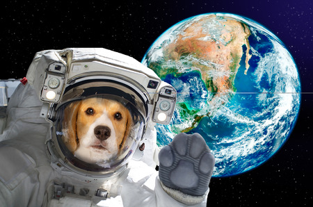 Dog astronaut in space on background of the globe. Elements of this image. Stock Photo