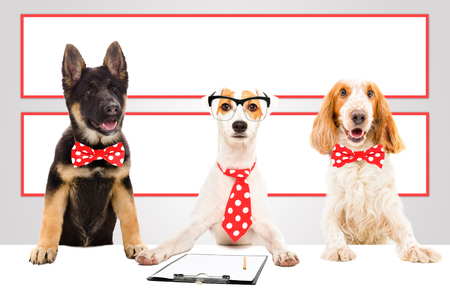Three funny office dogs on the background of a big banners
